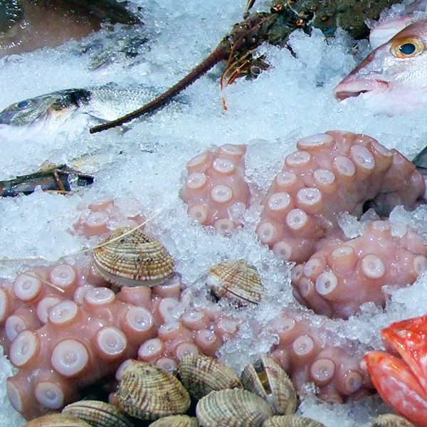 What should we pay attention to when eating squid?